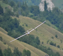 White glider, Seagull, flying towards the camera and banking to the right against the greenery of a mountainside