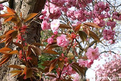 Blossoms on tree trunk