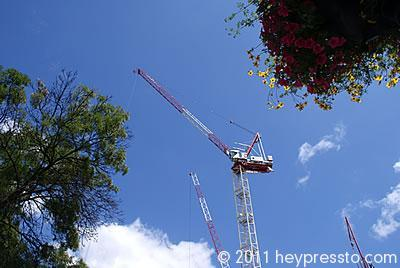 Crane and Flowers in Finchley