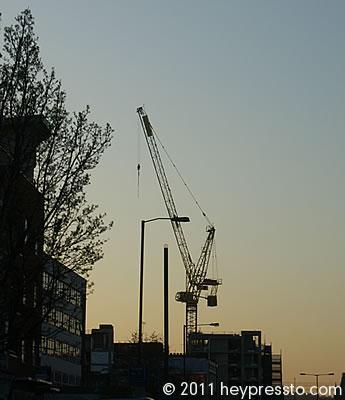 Crane at Yellow Sunset