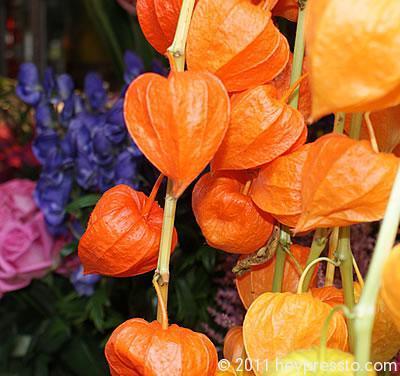 Orange Lanterns in Shad Thames