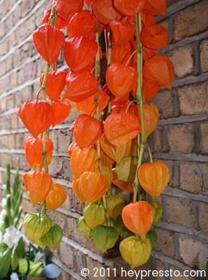 Orange Lanterns in Shad Thames 2