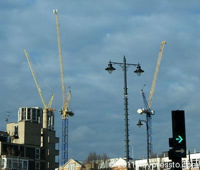 Yellow Cranes 2